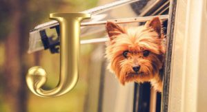 Dog Names That Start With J – Great Ideas for Your New Puppy