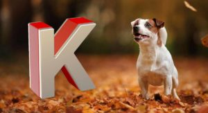Dog Names That Start With K – Great Ideas for Your New Pup