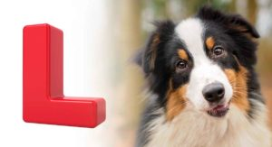 Dog Names That Start With L – Lovely Ideas For Your New Pet