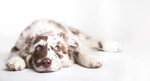 Dog Names That Start With S – Ideas For Your New Dog