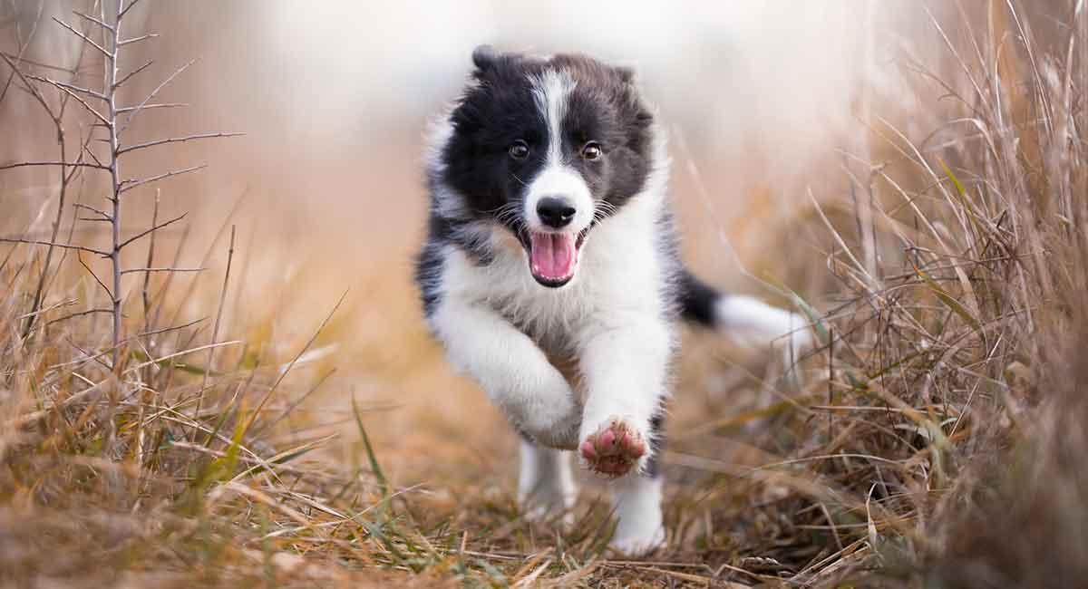 Dog names that start with T