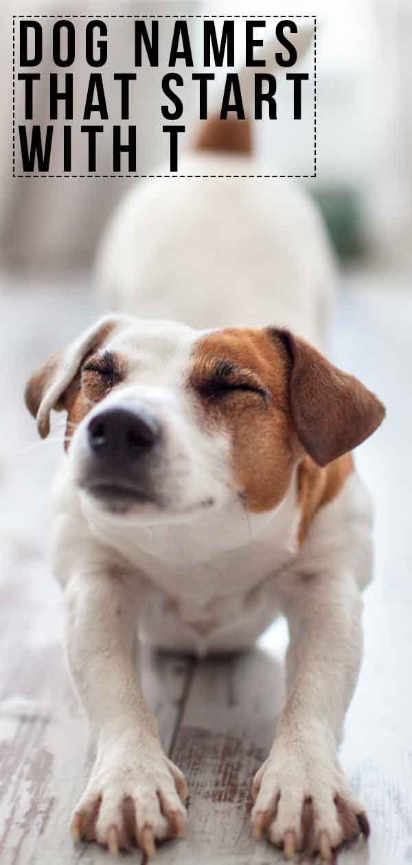 Dog Names That Start With T - More Ideas For Your New Pup