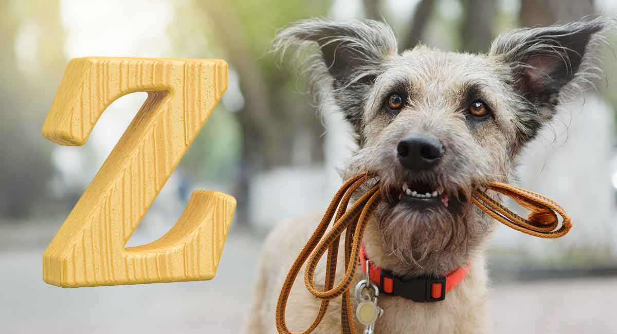Dog Names That Start With Z – Unusual Names for Your New Dog