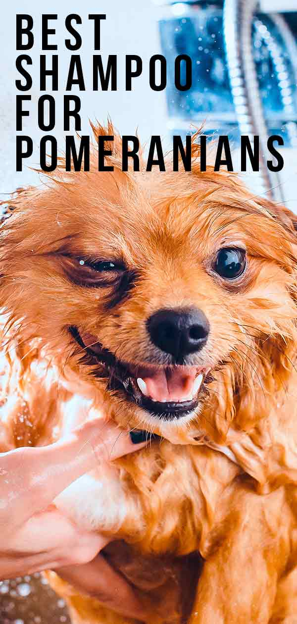 best shampoo for pomeranians