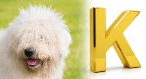 dog breeds that start with K