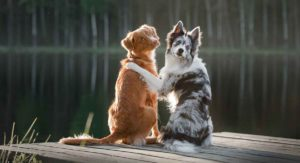 Dog Names That Start With H – Great Ideas For Your New Pup