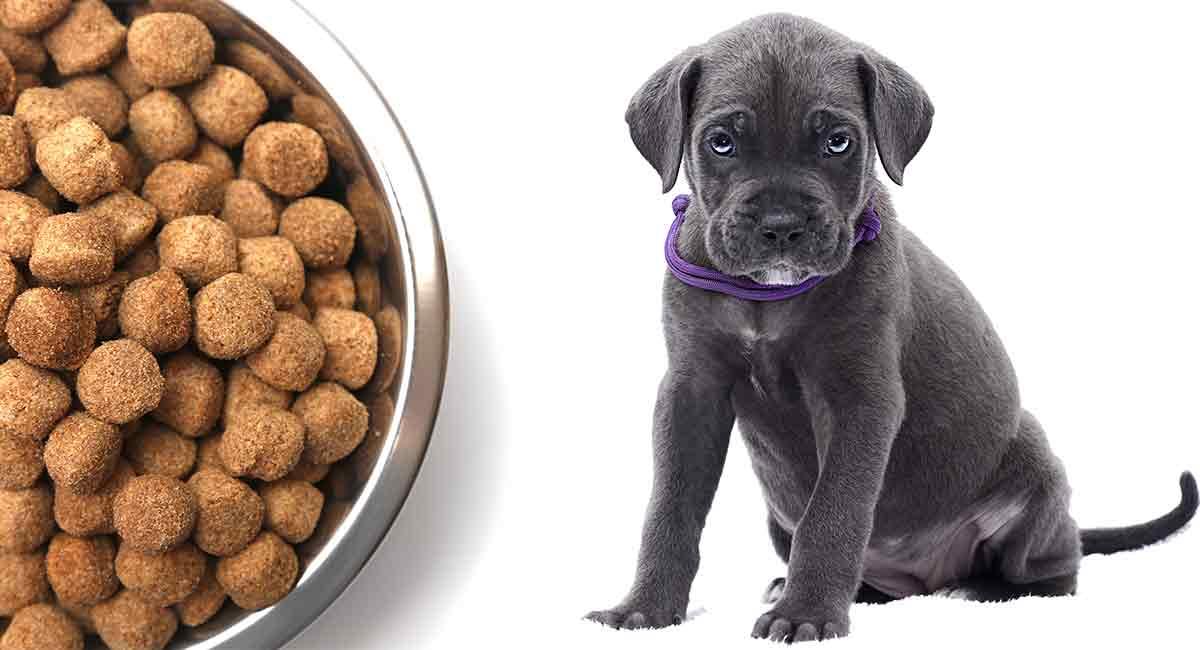 Feeding A Cane Corso Puppy