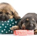 Best German Shepherd Gifts For GSD Lovers And Owners