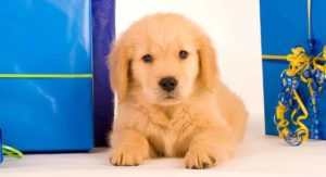 golden-retriever-gifts