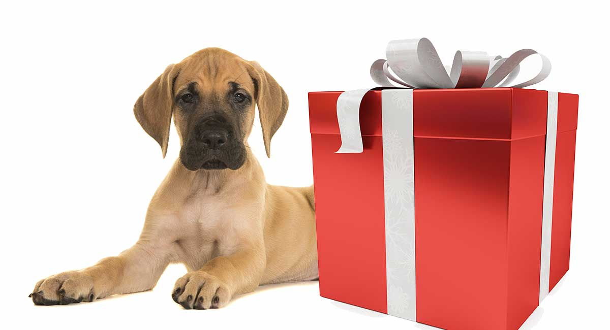 Great Dane gifts