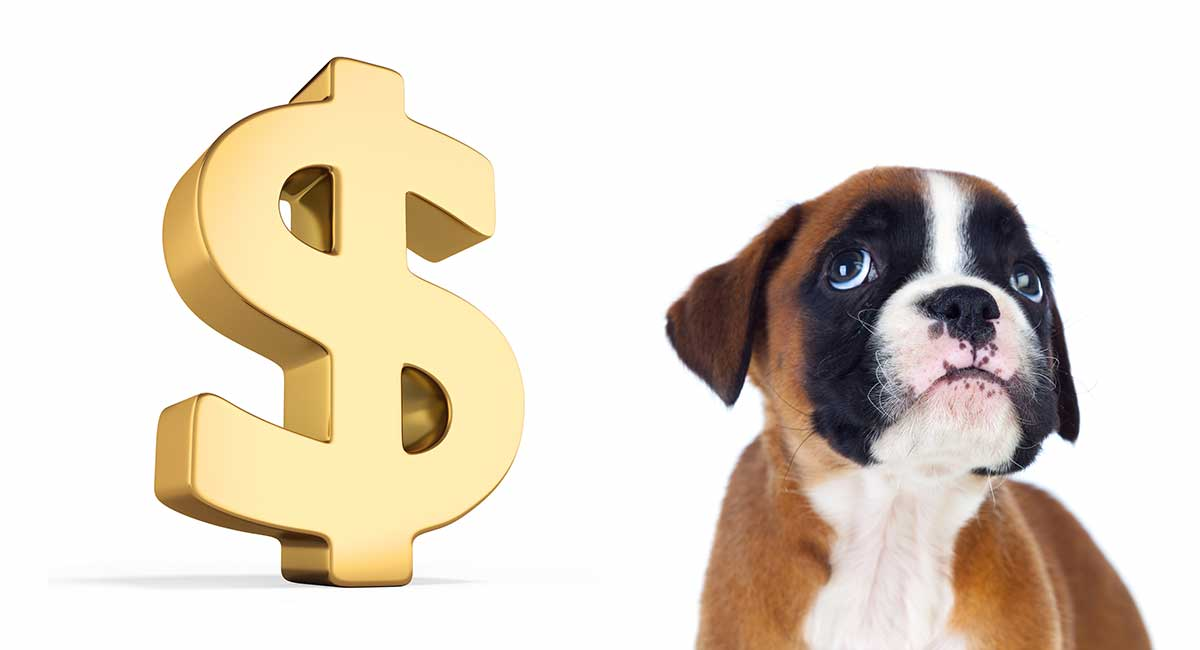 Boxers Cost To As Puppies