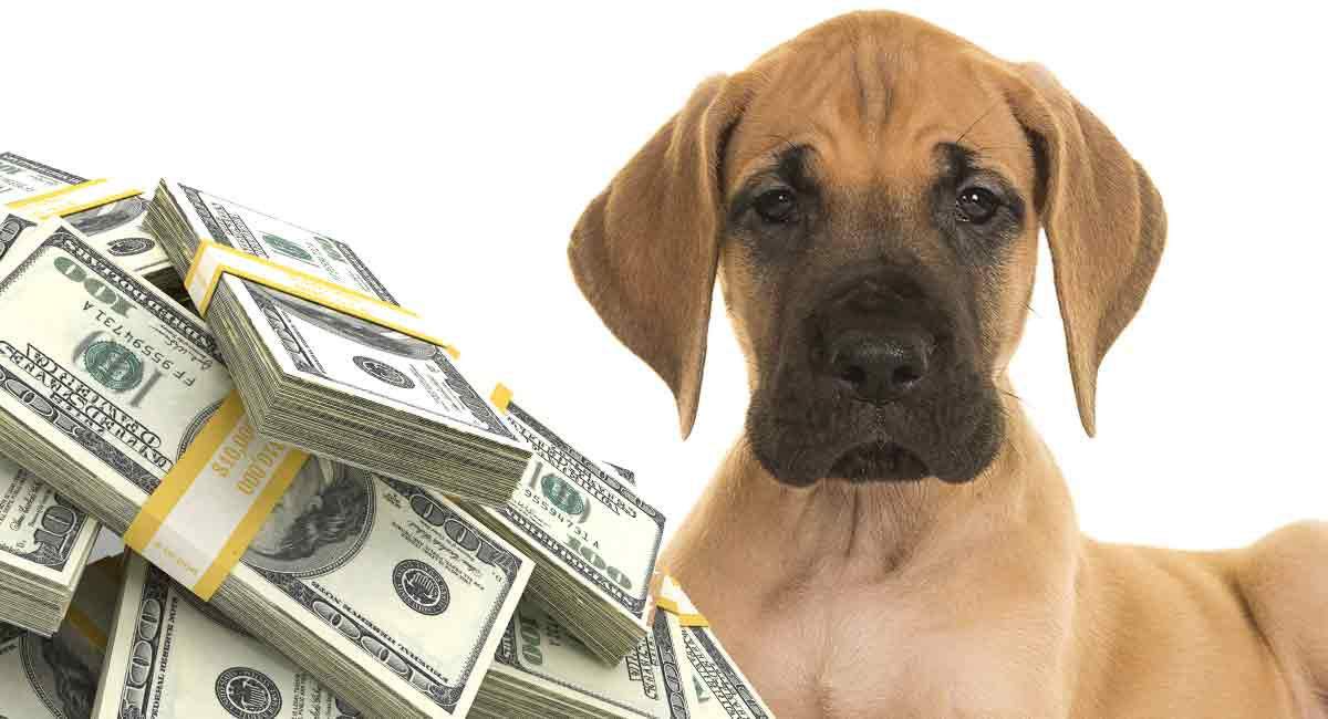 how much is a Great Dane?