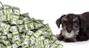 How Much Is A Miniature Schnauzer – How to Prepare For The Cost