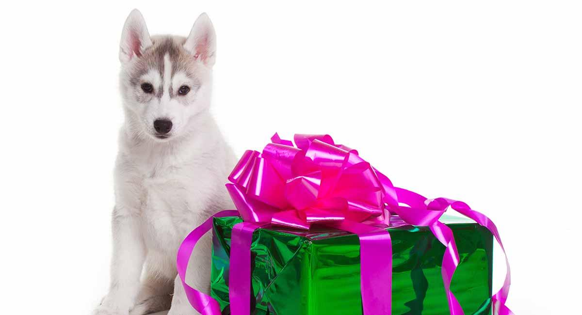 Husky Gifts