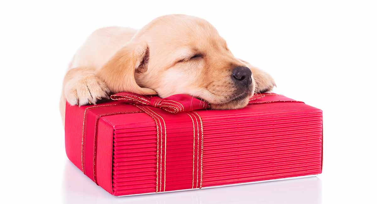 labrador retriever gifts