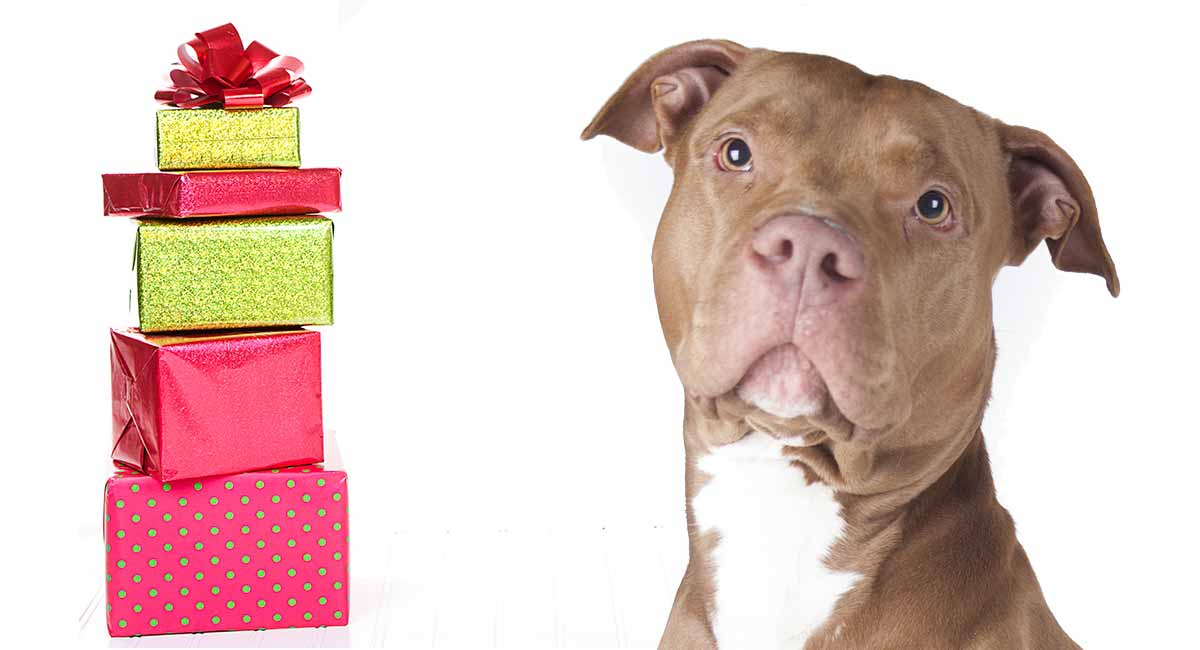 Pitbull Gifts: Find the Perfect Gift