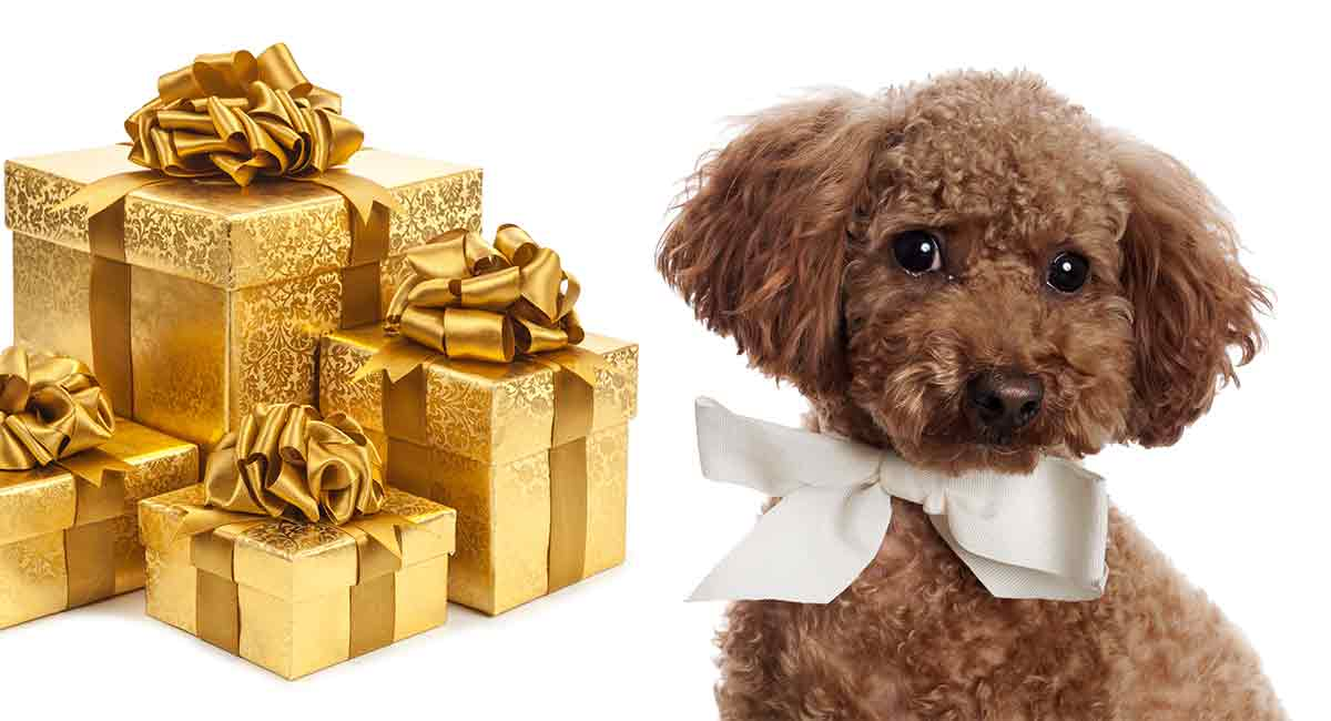 poodle gifts