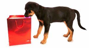 rottweiler gifts