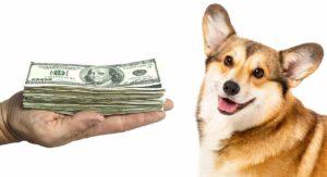 Corgi Price: The Cost of Bringing Home and Raising a Corgi