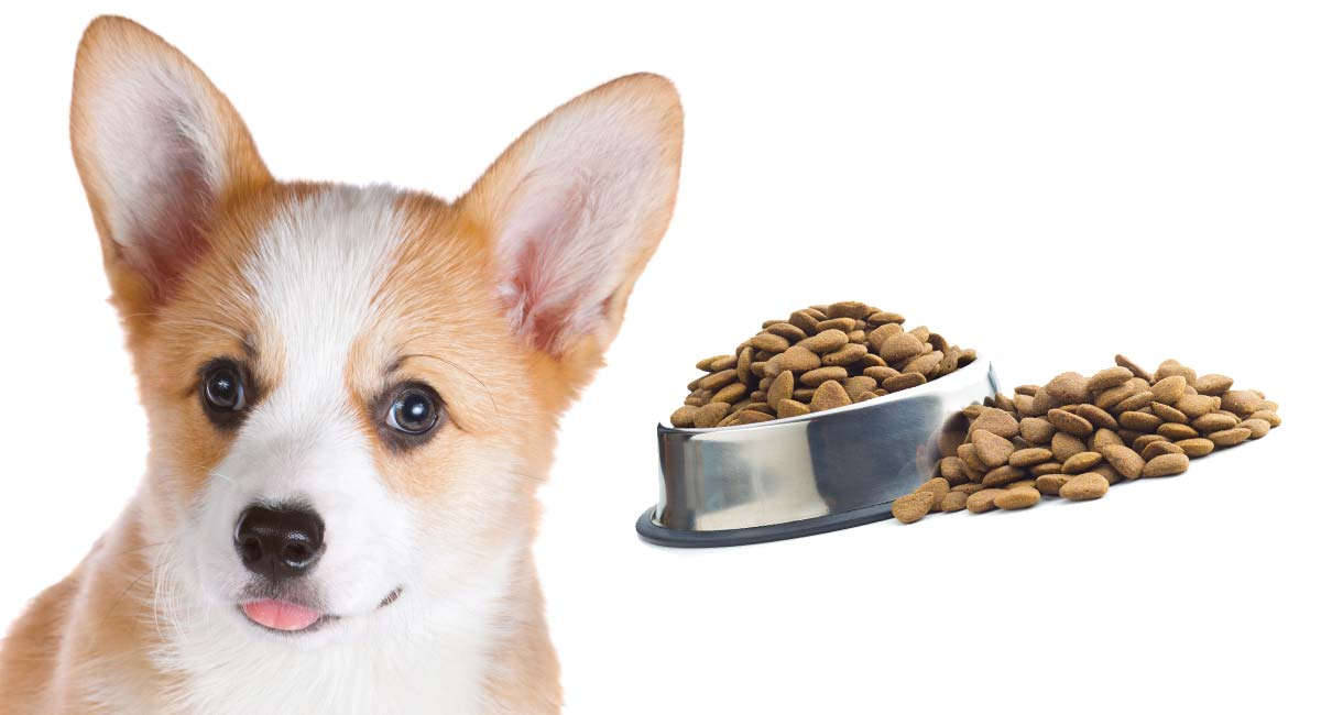 Feeding A Corgi Puppy The Best Schedules For Small Breeds