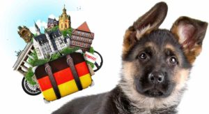 German Dog Names – Awesome Ideas Straight Out Of Germany