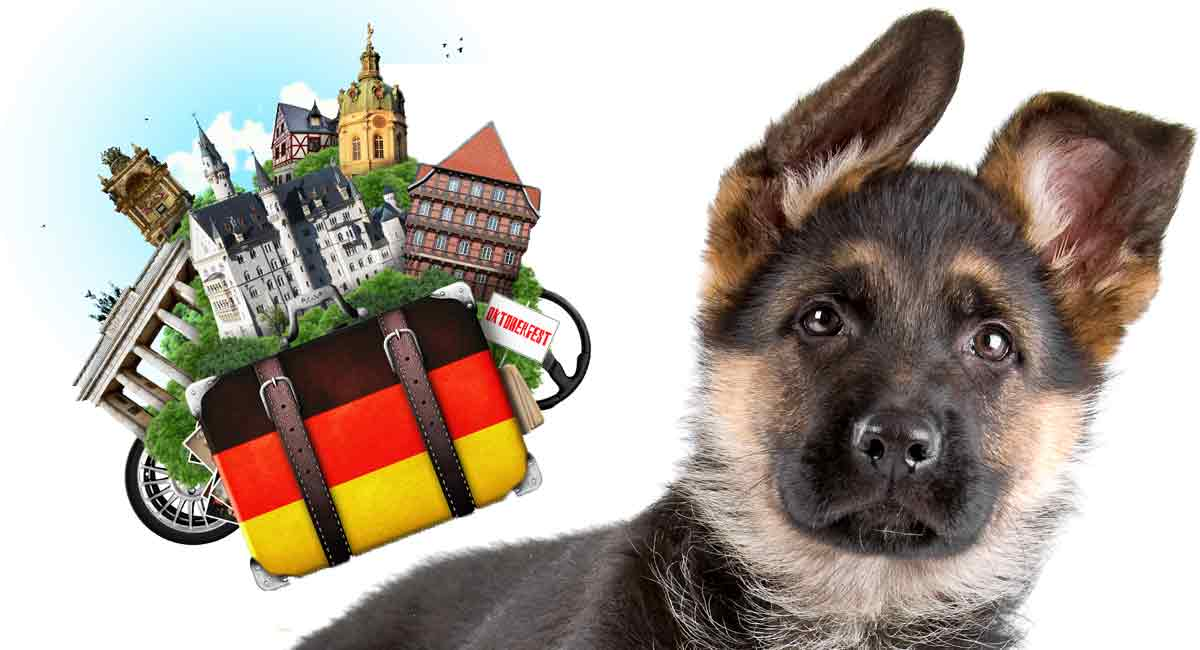 German Dog Names - Awesome Ideas Straight Out Of Germany