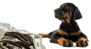 How Much Is A Doberman Pinscher Puppy To Buy And Raise?