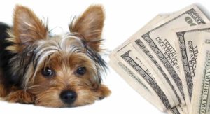 How much is a Yorkshire Terrier
