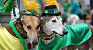 Irish Dog Names – Great Ideas With An Irish Twist