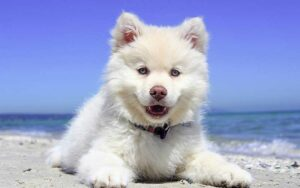 Best boy dog names for this fluffy white dog