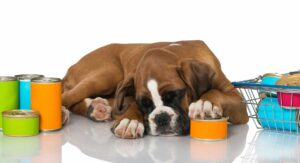 Feeding a Boxer Puppy the Best Diet in the Right Way