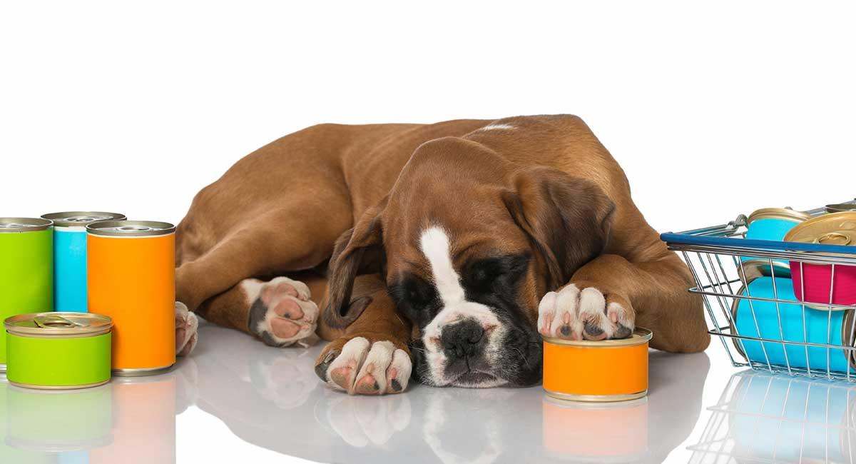 Feeding a Boxer Puppy