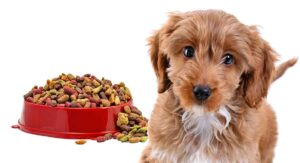 Feeding A Cockapoo Puppy – Routines, Quantities And Meals