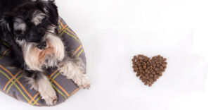 Best Food For A Miniature Schnauzer – From Puppyhood to Old Age