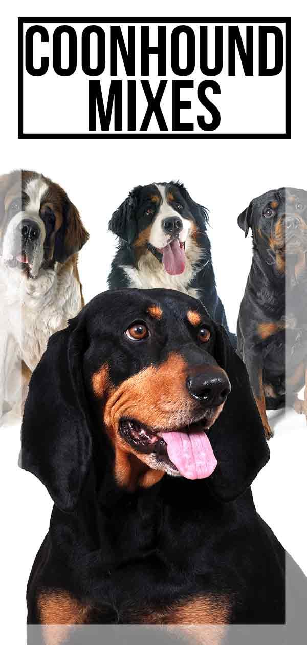 Coonhound Mixes