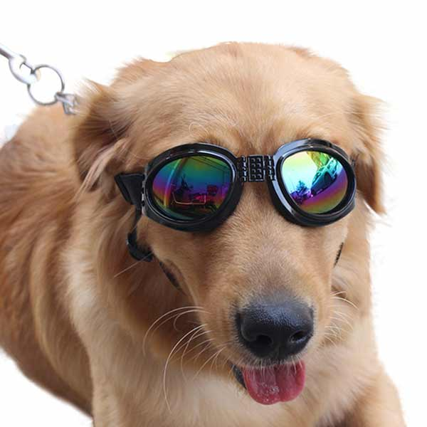 golden retriever with shades or sunglasses in dog names article