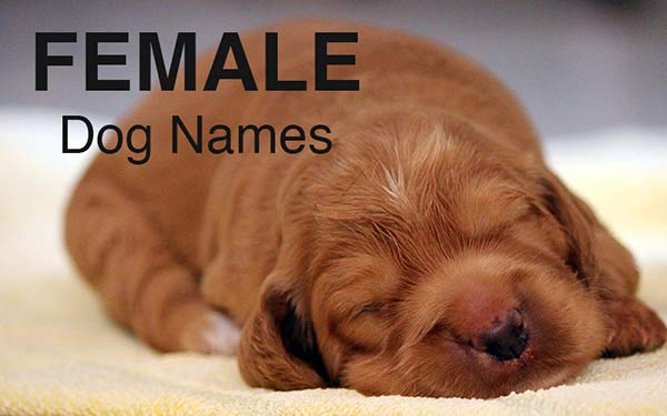 443fab70d Dog Names: Great Ideas For Naming Your Puppy - The Happy Puppy Site