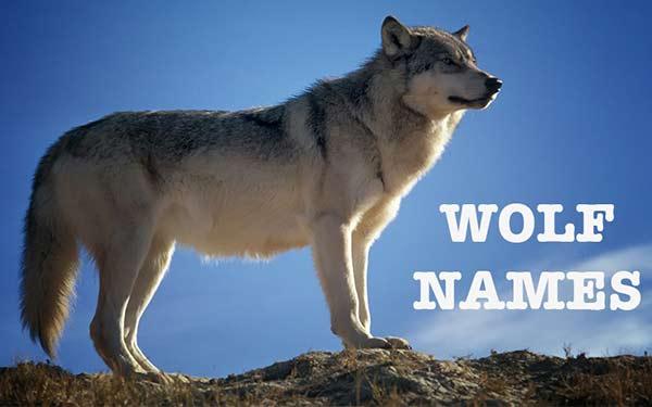 wolf dog name ideas