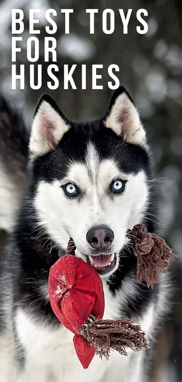 best toys for huskies