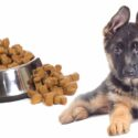 feeding a german shepherd puppy