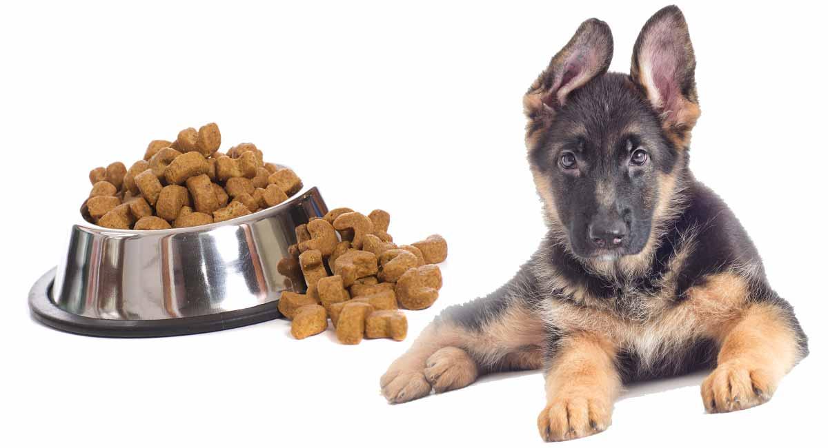 feeding a german shepherd puppy