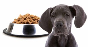 Feeding A Great Dane Puppy – Schedules For Giant Breeds