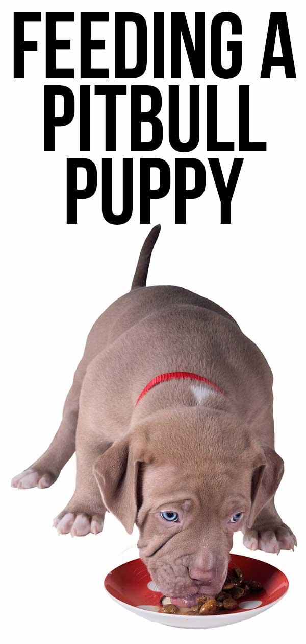 Feeding a Pitbull Puppy