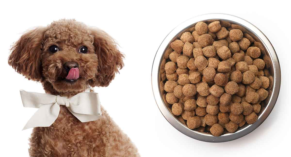 Feeding A Poodle Puppy Diet Tips And Scheduling Ideas
