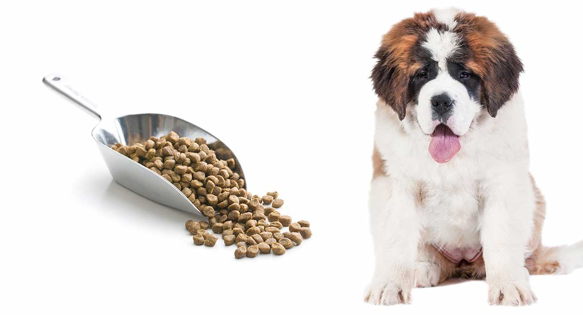 Feeding A St Bernard Puppy The Right