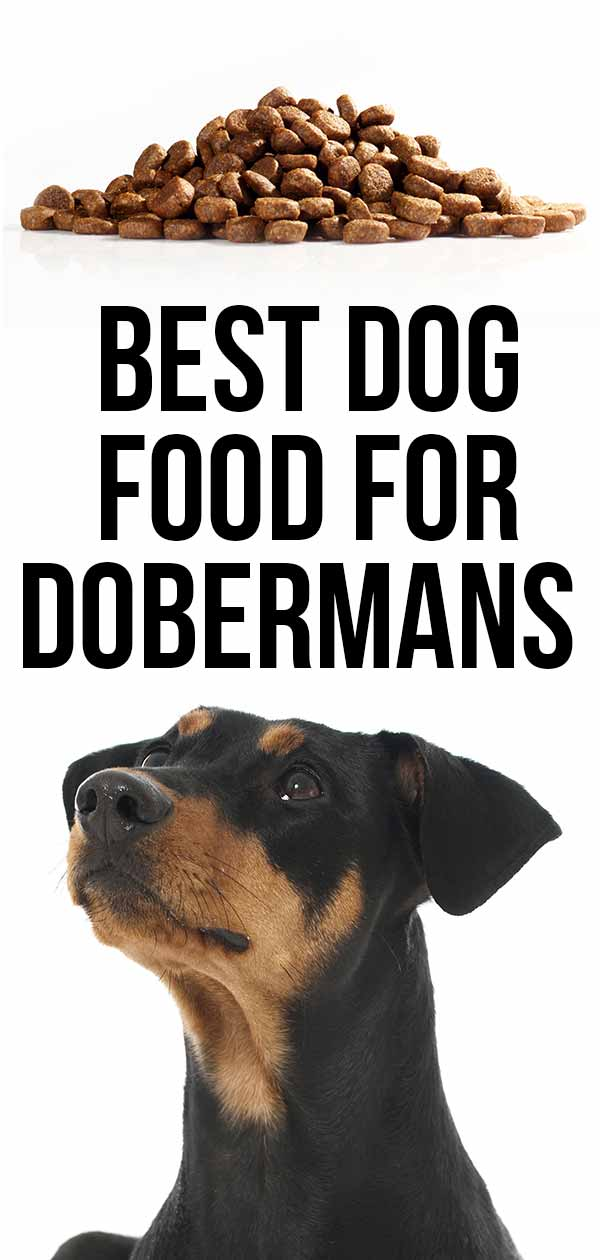 best dog food for doberman breed