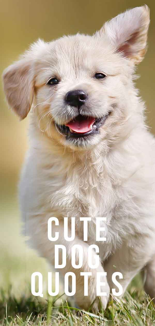 cute dog quotes