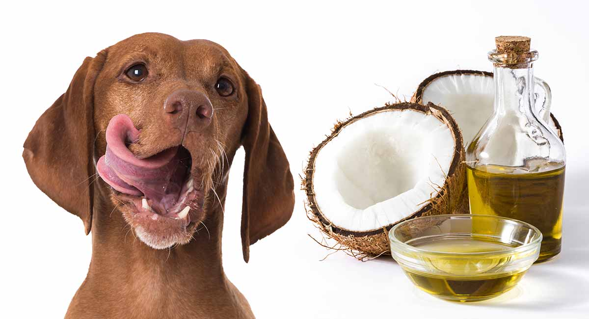 Coconut Oil For Dogs - What Are The Benefits And Does It Really Work?