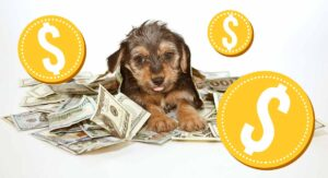 Most Expensive Dog – The Priciest Pups in Dogdom