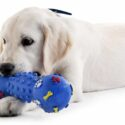 Best Chew Toys For Labs That Love To Play, Chew And Zoom